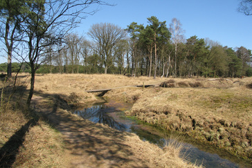 Meanders in de Beek